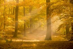 Herbststimmung am Rimberg im hessischen Hinterland, Deutschland © Jan Bosch