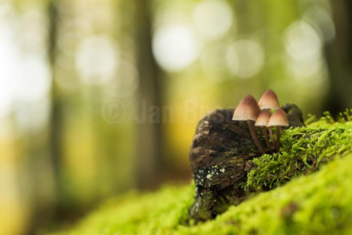 Pilze im Nationalpark Edersee, Deutschland © Jan Bosch