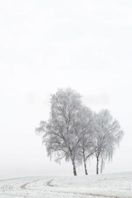 Birken mit Raureif bei Dilschhausen, Deutschland. © Jan Bosch