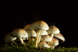 Pilze am Rimberg im hessischen Hinterland, Deutschland © Jan Bosch